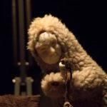 All Puppets, Large and Small—in Québec and the Czech Republic