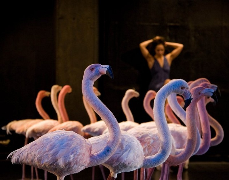 To give the improvising actors something of a spatial challenge, the Hungarian production Egg(s)hell featured a set of flamingos.