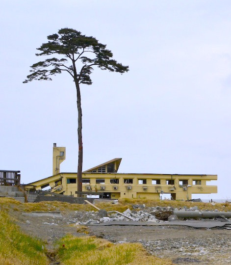 "The ""miraculous pine tree"" in Rikuzen Takata. © Jacob Ehnmark"